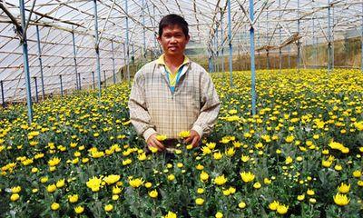 'Hải Kim Cương', ông chủ vườn cúc tiền tỷ đất Lâm Đồng