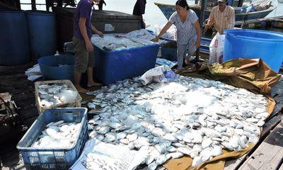 Cá chết trắng bè, người nuôi cá đem đến đổ trước nhà máy