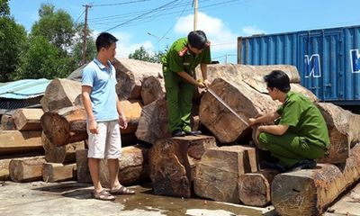 Phát hiện đường dây làm giả hồ sơ vận chuyển gỗ lậu
