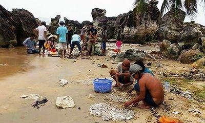 Khoảng 2 tấn hải sâm chết trôi dạt vào bờ