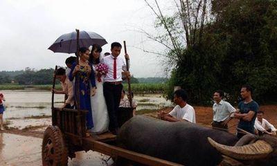 Xôn xao màn rước dâu bằng... xe trâu trong ngày mưa lũ ở Thanh Hóa