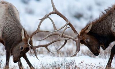 Rùng mình trước những trận 'quyết chiến' trong thế giới động vật