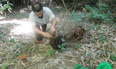 Tái thả về rừng 3 loài động vật hoang dã thuộc nhóm nguy cấp