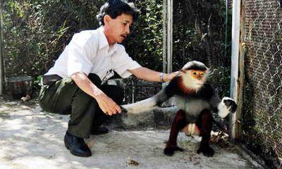 Tái thả một cá thể voọc vào Khu bảo tồn thiên nhiên Sơn Trà