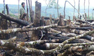 Sơn La: Rừng tự nhiên Ngọc Chiến đang cạn kiệt