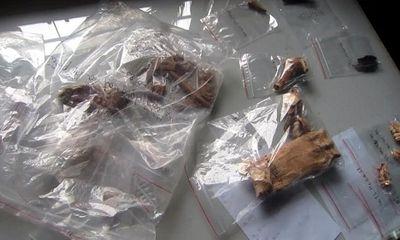 Hà Tĩnh: Truy tìm dấu tích hiện vật thời tiền sử