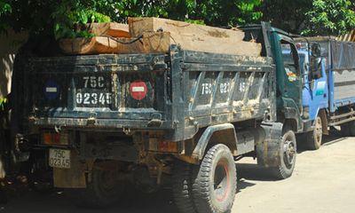 Liên tiếp bắt giữ 3 vụ gỗ lậu tại Thừa Thiên - Huế