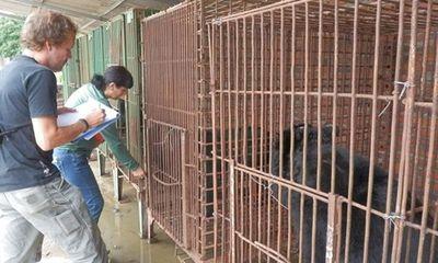 Gấu nuôi nhốt bị bỏ đói, chết hàng loạt tại Quảng Ninh