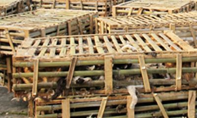 Phát hiện 3 tấn mèo Trung Quốc tuồn vào Hà Nội tiêu thụ