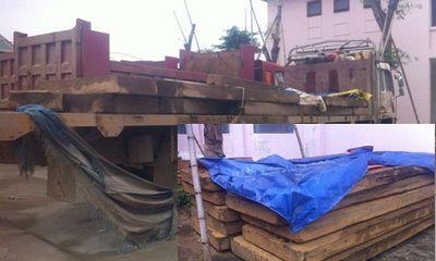 Nghệ An: Bắt nhiều vụ vận chuyển gỗ lậu trong dịp Tết Nguyên đán