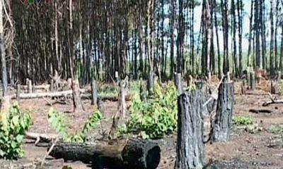 """""""Đội lốt"""" chuyển đổi rừng nghèo để lấy gỗ"""