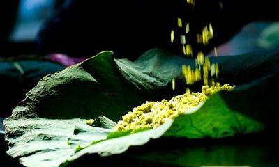 Thu Hà Nội: Nồng nàn hương cốm
