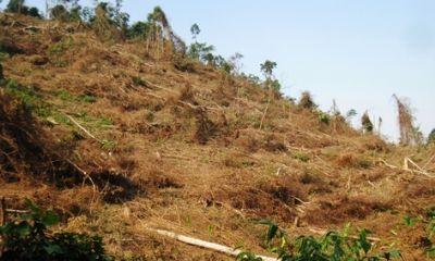 Cần xử lí nghiêm việc dùng thuốc diệt cỏ dọn rừng