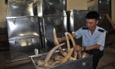 Cận cảnh bắt giữ vụ buôn lậu hơn 2 tấn ngà voi