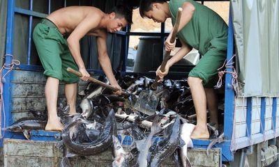 Lào Cai: Bắt giữ vụ nhập lậu hơn 500kg cá tầm