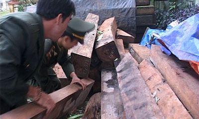 Quảng Trị: Phát hiện 12m3 gỗ lậu tại biên giới
