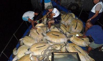 Phillipines bắt ngư dân Việt săn trộm rùa biển