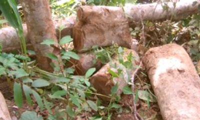 Đắk Lắk: Kiểm Lâm và bảo vệ rừng