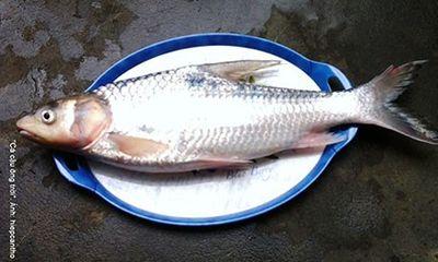 Muốn ăn cá