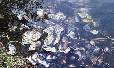 Đi bộ, phát hiện hơn 2 tỷ tiền mặt trôi nổi trên sông
