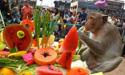 Thái Lan tổ chức tiệc buffet cho khỉ hàng năm