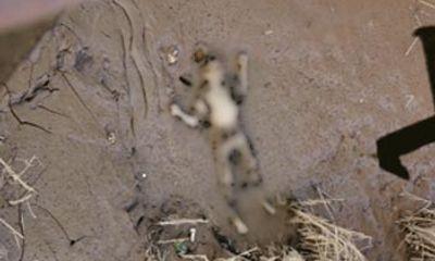 Phát hiện xác người đàn ông bị đập chết dưới ruộng