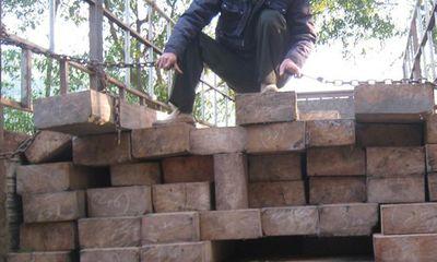 Bắt giữ xe tải vận chuyển 14 phách gỗ lậu
