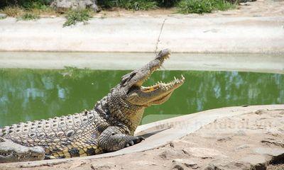 Người đàn ông kỳ cục cố gạ đổi cá sấu lấy…bia