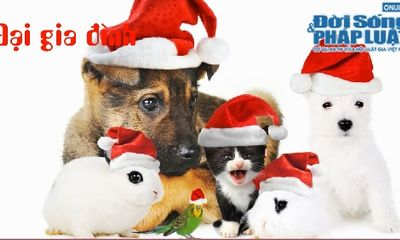 Clip: Cùng thú cưng...làm điệu trong ngày Noel