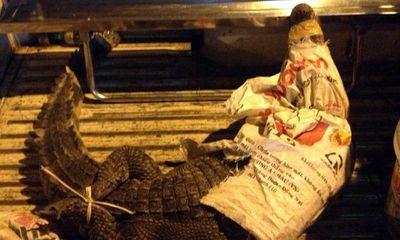 Hoảng vì cá sấu dài 2m nhảy ra giữa đường Sài Gòn