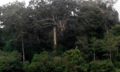 Bí ẩn lời nguyền sau mối tình loạn luân nơi rừng thiêng