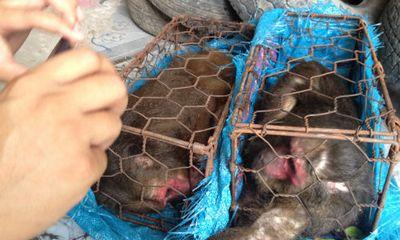 Bắt đối tượng vận chuyển trái phép 3 con khỉ mắt đỏ