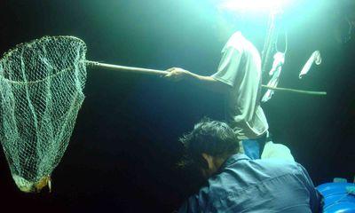 Phú Yên: Câu mực đêm, một ngư dân mất tích