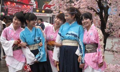 Hoa anh đào Nhật Bản trở lại Hà Nội