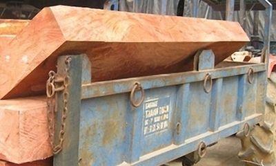 1,22m3 gỗ lậu được vận chuyển bởi...công an viên