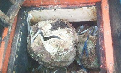 Lại tạm giữ tàu cá chở trái phép 150 con sò tai tượng