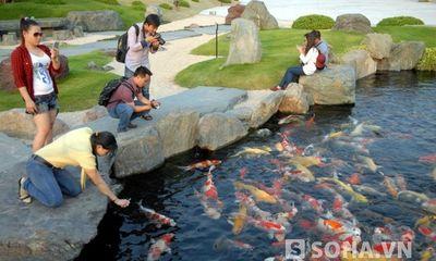 Hồ cá chép chục ngàn đô mỗi con ở Sài Gòn