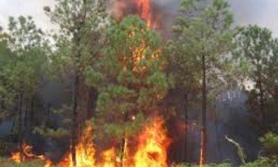 Nắng nóng kéo dài, nguy cơ cháy rừng tăng cao