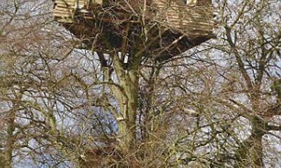 """Ngôi nhà hai tầng độc đáo """"vắt vẻo"""" trên cây cao"""