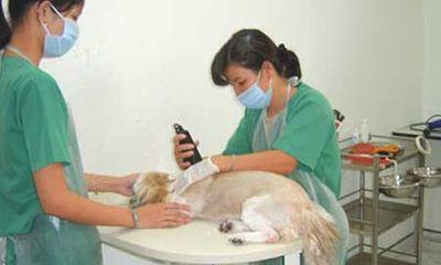 Chuyện các ông chủ xin visa, chữa bệnh và cầu siêu cho thú cưng