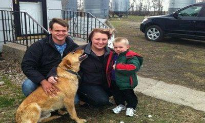 Chó trung thành cứu chủ nhân 3 tuổi bị lạc