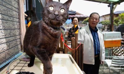Chú mèo đoàn tụ với chủ sau 3 năm thảm họa sóng thần