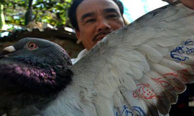 Ngư dân Lý Sơn bắt được chim có ký tự lạ ở Hoàng Sa