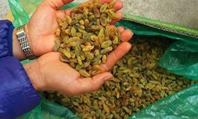 Thu giữ hơn 10 tấn ô mai, nho khô Trung Quốc nhập lậu