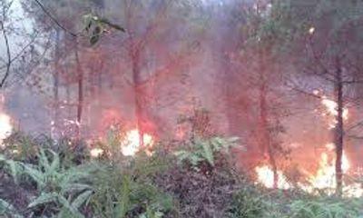 Đuối sức vì chữa cháy rừng, một thôn đội trưởng tử vong