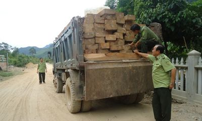 Đà Nẵng: Bắt giữ ô tô chở 61 phách gỗ lậu... đậu bên đường
