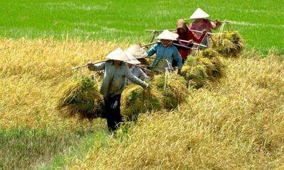 Nông sản Việt Nam: Bớt dựa vào thị trường Trung Quốc