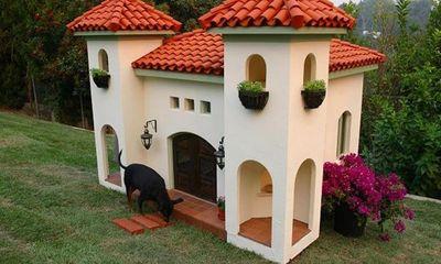 Nơi ở xa xỉ cho thú cưng của giới siêu giàu