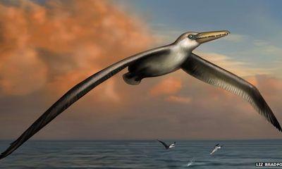 Hé lộ về loài chim có sải cánh 7,4m