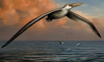 Phát hiện loài chim lớn nhất từng tồn tại trên trái đất